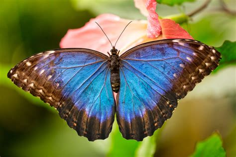 butterfly effect personal cycles  transformation