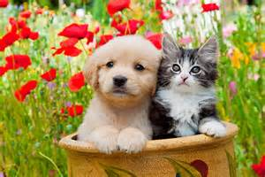 Puppies and Kittens with Flowers
