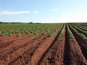 Addressing Agricultural Land Degradation  U0026 Soil Erosion