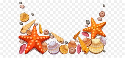 seashell clip art sea shells decor png vector clipart