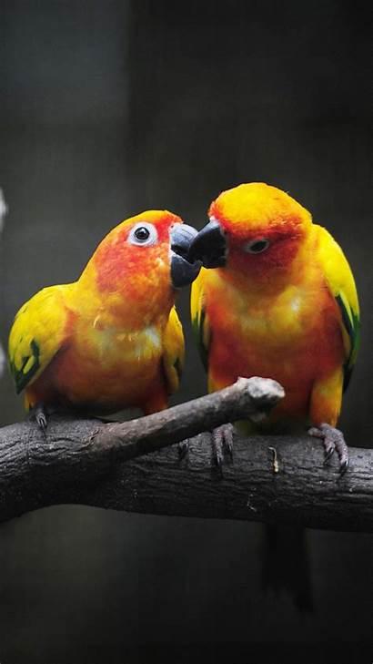 Wallpapers Birds Lovebirds Bird 4k Parrots Enver
