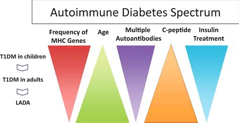 predicting adult onset autoimmune diabetes diabetes