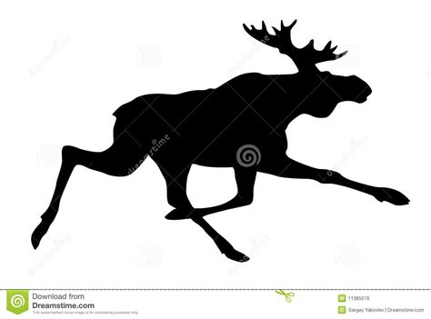 Moose Royalty Free Stock Images Image 11385079