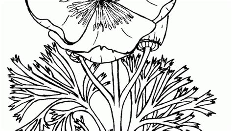 Difficult Coloring Pages For Teenagers Of Flowers Coloring