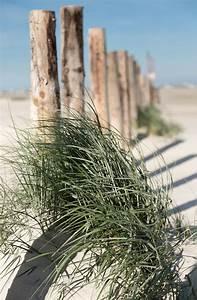 Fotoabzug Auf Holz : strandhafer an pfahlreihe strandeins ~ Orissabook.com Haus und Dekorationen