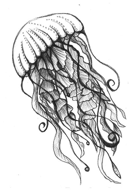 Drawn Jellyfish Black And White Pencil And In Color