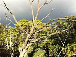 Achat Tronc Arbre Decoratif : arbre mort achat vente d 39 arbre mort ~ Zukunftsfamilie.com Idées de Décoration