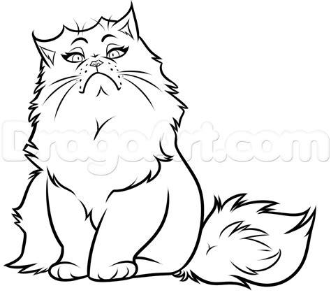 drawn cat persian cat pencil   color drawn cat
