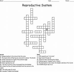 Diagram  Female Reproductive System Diagram Se 6 Answers