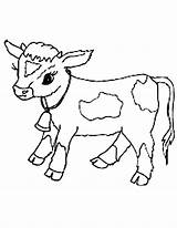 Cow Coloring Pages Baby Calf Cows Clipart Netart Drawing Printable Cattle Face Cute Print Library Golden Template Clip Cartoon Animal sketch template