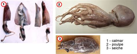 comment cuisiner poulpe comment cuisiner des tentacule de poulpe 28 images
