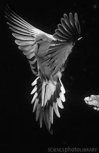 Dove … | Birds, Beautiful birds, Mourning dove