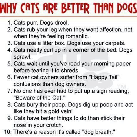 dogs cats better why than dog then cat babies hate story funny palmtalk wiley dakota via