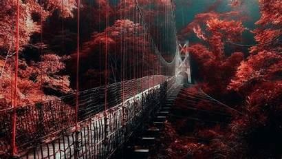 Aesthetic Dark Wallpapers Bridge Trees Autumn Between