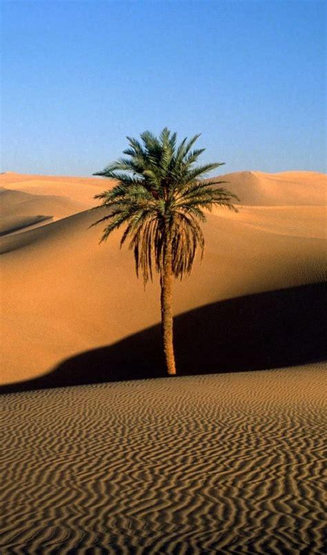 Uma palmeira solitária no Saara | Lindas paisagens ...