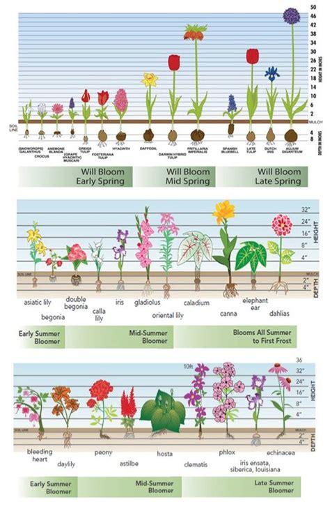 best 25 planting bulbs ideas on bulb flowers