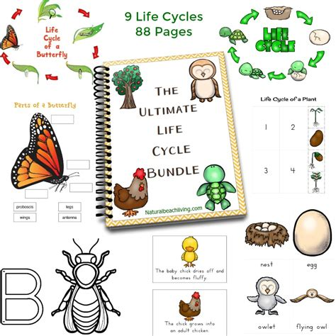 35 the best preschool themes and lesson plans 174 | life cycle printables bundle fb