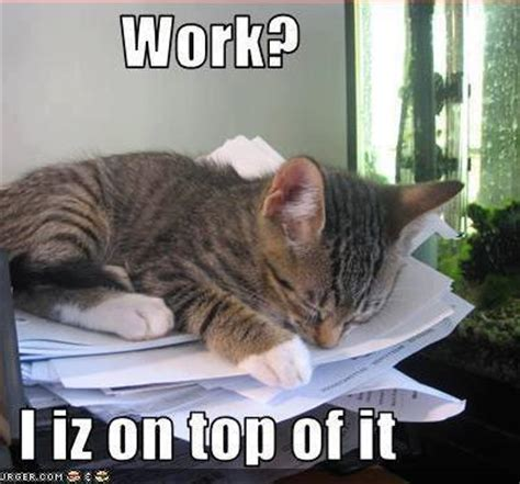 Working Cat Meme - best lolcats work i iz on top of it lolcats life is more fun with animals pinterest