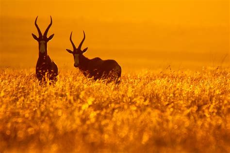 3 Ways To Use Backlighting For More Creative Nature Photos