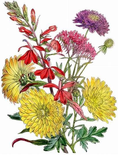 Flowers Flower Fall Clipart Bouquet Clip Victorian