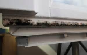 Schimmel Aus Silikon Entfernen : schimmel am fenster schimmel effektiv entfernen ~ A.2002-acura-tl-radio.info Haus und Dekorationen