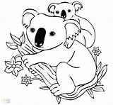 Koala Bear Coloring Drawing Pages Cartoon Printable Koalas Tree Animal Getdrawings Sheets Neocoloring Adult sketch template