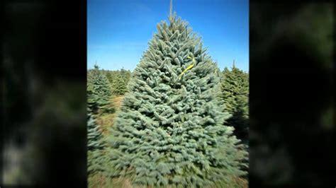 christmas tree farms pennsylvania christmas trees indiana pa 15701 814 948 4990 pineton 5061