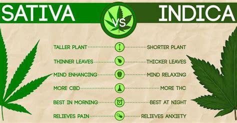 Cannabis 101 Learn About Medical Cannabis