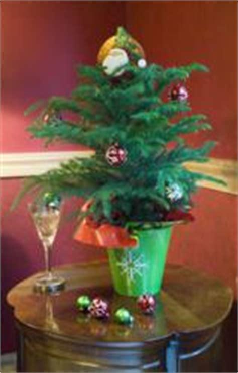 mini christmas tree live decorate with live mini trees this season