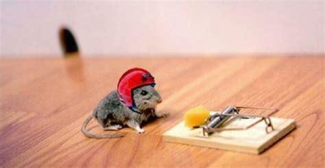 Maus Geht Nicht In Die Falle by Thebest12 Bilder