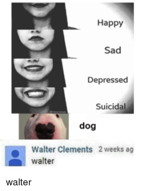 happy sad depressed suicidal dog walter clements  weeks