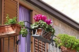 Pflanzen Für Balkon : balkon pflanzen egal ob nord oder s dbalkon es gibt f r jeden balkon die passenden pflanzen ~ Sanjose-hotels-ca.com Haus und Dekorationen