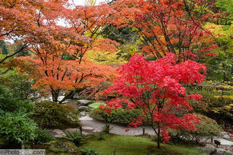 maple seattle japanese garden washington park