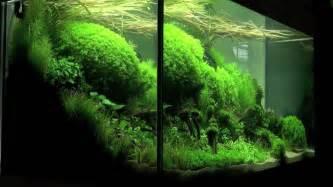 aquascaping aquarium ideas from the of the planted aquarium 2011 part 1