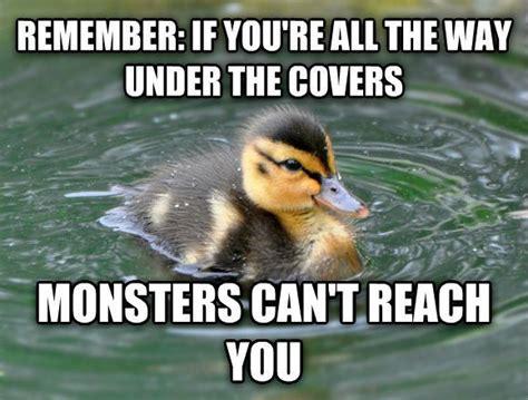 Mallard Duck Meme - almost advice mallard meme meme collection