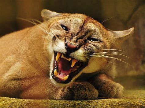 Puma - Spoki