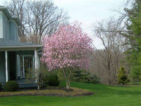 Ornamental Trees For Planting Close To Houses