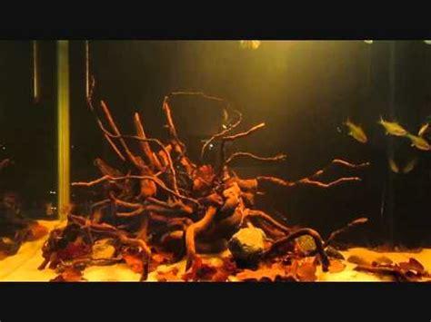 Amazon biotope aquarium YouTube
