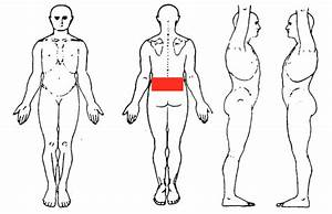 Diagram Of Torso Pain : case example 1 lumbar pain markgibsonphysio ~ A.2002-acura-tl-radio.info Haus und Dekorationen