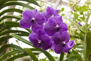Maria U0026 39 S Orchids  New York Orchid Show 2013  Vandas