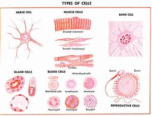 Learning About The Cell