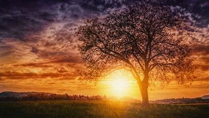 Sunset Trees Nature Wallpapers Background Resolution 4k