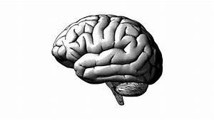 Best Diagram Of Human Nervous System Clip Art