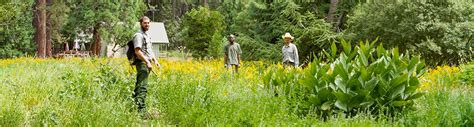 invasive  native plants sequoia kings canyon