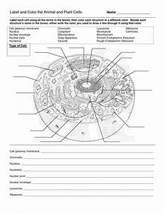 Animal Cell Blank Animal Cell Coloring Packet Animal Cell