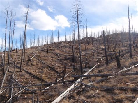 forests arent growing   wildfires research