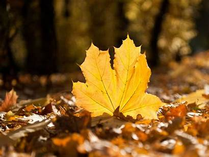 Fall Wallpapers Leaves Autumn Falling Leaf 1080p