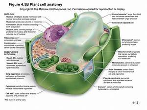 Labeled Plant Cell And Functions