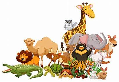 Animals Together Wild Different Types Vector Animal