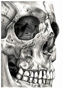 30 best images about skeleton drawings on Pinterest | Ribs ...